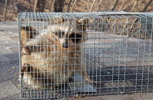 San Antonio Wildlife Removal